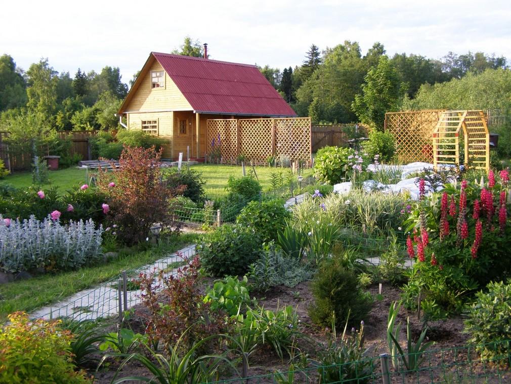 спортсмен красивые сады дачников подмосковья фото жду еще